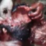 【※最恐怖/超閲覧注意】脳と目をえぐり出すブラジルの刑務所内の映像をご覧下さい・・・(免疫のある人以外閲覧禁止)