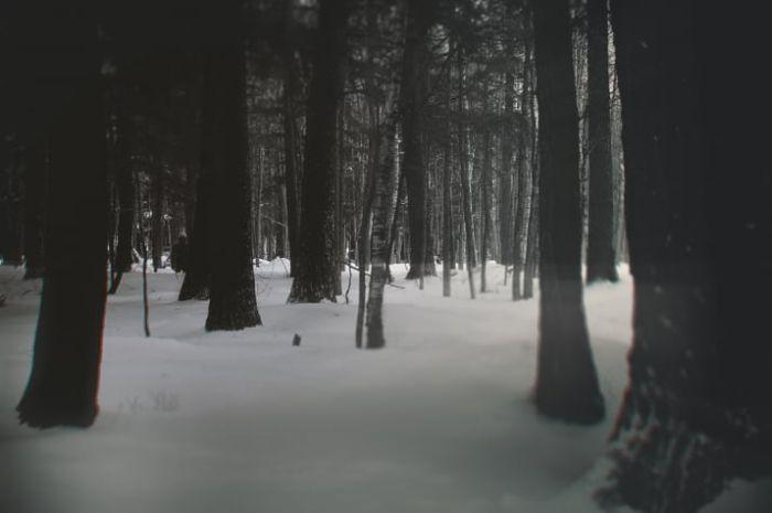 【画像11枚】世界の森で撮影された怖い写真、ホントに怖かった。・10枚目