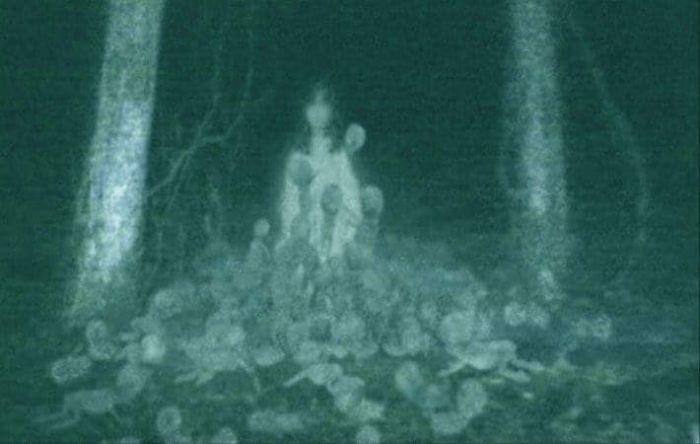 【画像11枚】世界の森で撮影された怖い写真、ホントに怖かった。・2枚目