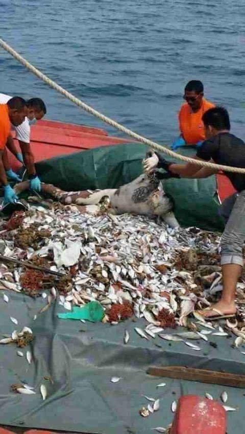 【超・閲覧注意】漁師が最も恐れる事件がこちら。(画像)・2枚目