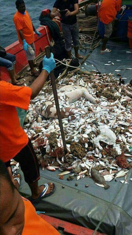 【超・閲覧注意】漁師が最も恐れる事件がこちら。(画像)・3枚目