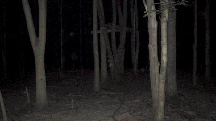 【画像11枚】世界の森で撮影された怖い写真、ホントに怖かった。・4枚目