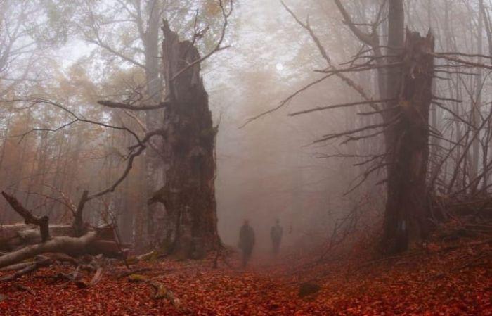 【画像11枚】世界の森で撮影された怖い写真、ホントに怖かった。・5枚目