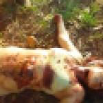 【閲覧注意】レイプされた女性の惨殺遺体が発見される。これはヒドすぎる・・・(動画)