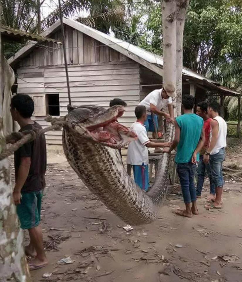 【衝撃】マジでシャレにならん大蛇に噛まれた人の腕・・・(動画)・1枚目