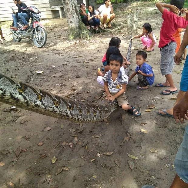 【衝撃】マジでシャレにならん大蛇に噛まれた人の腕・・・(動画)・2枚目