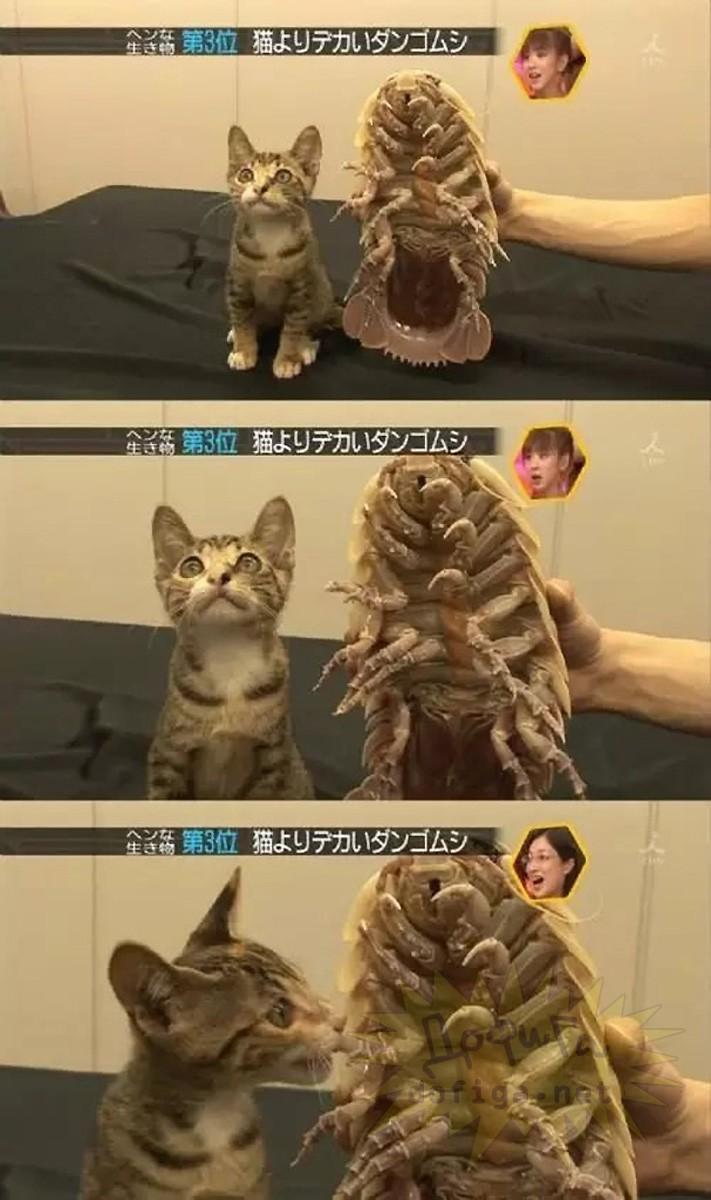 「日本人マジで狂ってる・・・」海外で話題になってジャパニーズTV番組。・26枚目