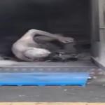 【衝撃】炎上したコンビニで取り残された人をご覧ください。(動画)