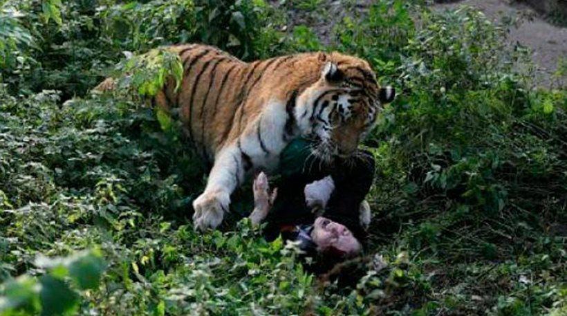 【衝撃】動物園のトラが飼育員をガチで食いにかかる。(画像)・1枚目