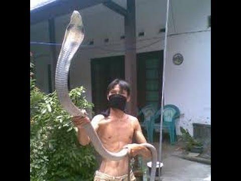 【衝撃】「コブラに噛まれたぜっ」とSNSにアップした若者、帰らぬ人となる。(画像)・1枚目