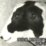 「福島で奇形生物が続出してるぞ・・・」と海外サイトで取り上げられる。(画像)