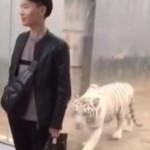【衝撃】動物園の「ホワイトタイガー」人間を襲う瞬間がこちら。(動画)
