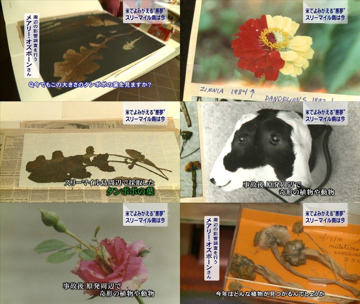 「福島で奇形生物が続出してるぞ・・・」と海外サイトで取り上げられる。(画像)・5枚目