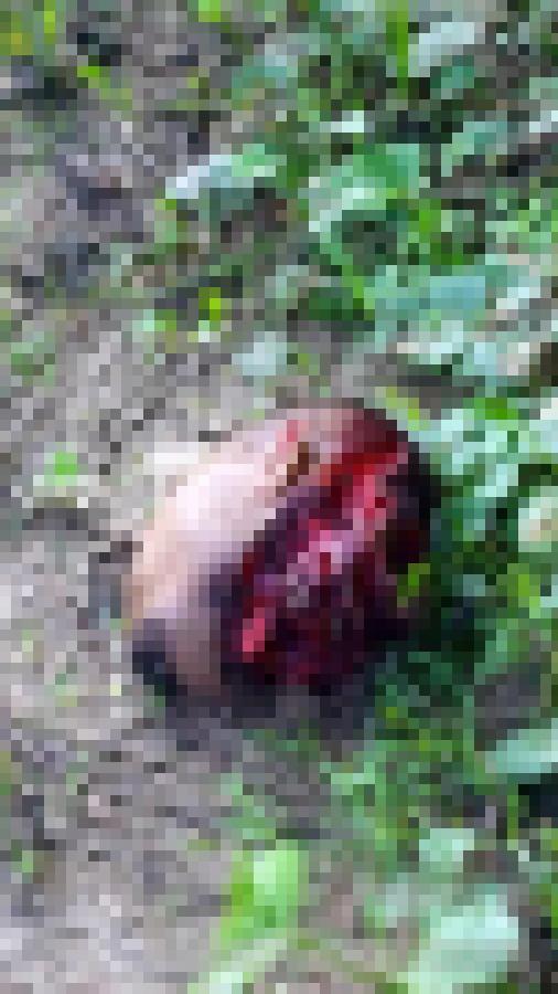 【超閲覧注意】ブラジルのギャング、残虐のフルコースを実行する・・・(画像)・9枚目