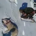 撃ち殺した「オオカミ」と記念撮影。ただオオカミは死んだふりをしていた・・・(動画)