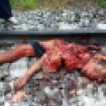 【超閲覧注意】列車に轢かれた人、色々部位が足りない・・・(画像)