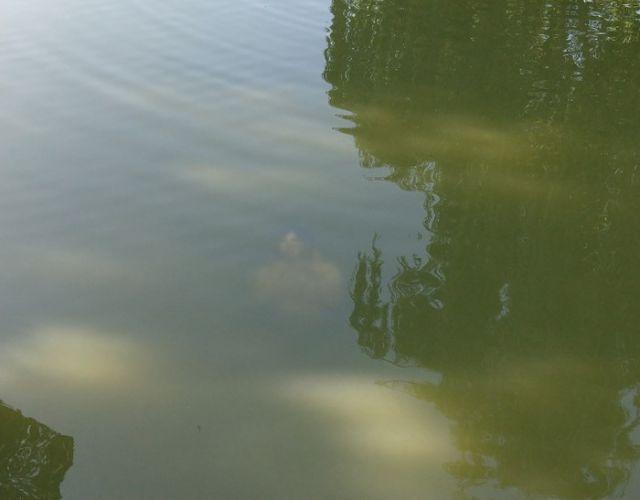 【恐怖】公園の池にナニかを発見した人が撮影した写真コワすぎ。。・1枚目