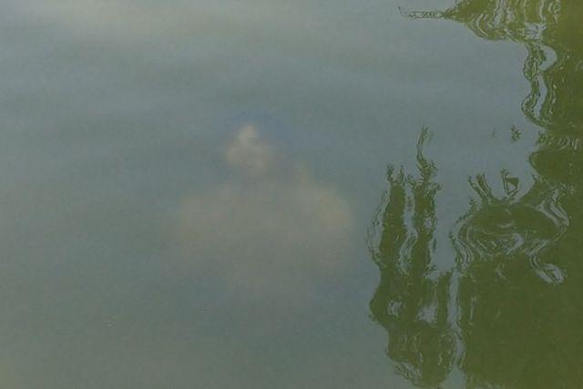 【恐怖】公園の池にナニかを発見した人が撮影した写真コワすぎ。。・2枚目
