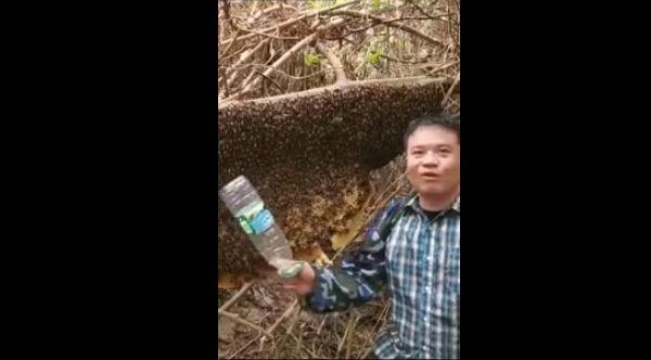 【自業自得】蜂の大群をペットボトルでシバきまくった中国人ニキ、当然こうなる・・・・・(画像、動画あり)・1枚目