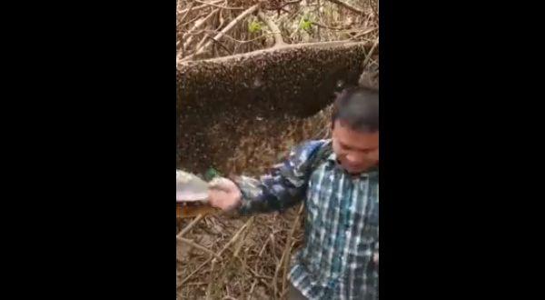 【自業自得】蜂の大群をペットボトルでシバきまくった中国人ニキ、当然こうなる・・・・・(画像、動画あり)・2枚目