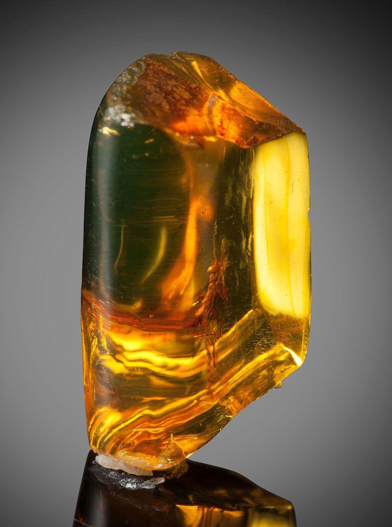 ※ 【フレッシュ】琥珀に閉じ込められたカマキリさん(1200万歳)、マジで感動でワロタwwwwwwww(画像あり)・1枚目