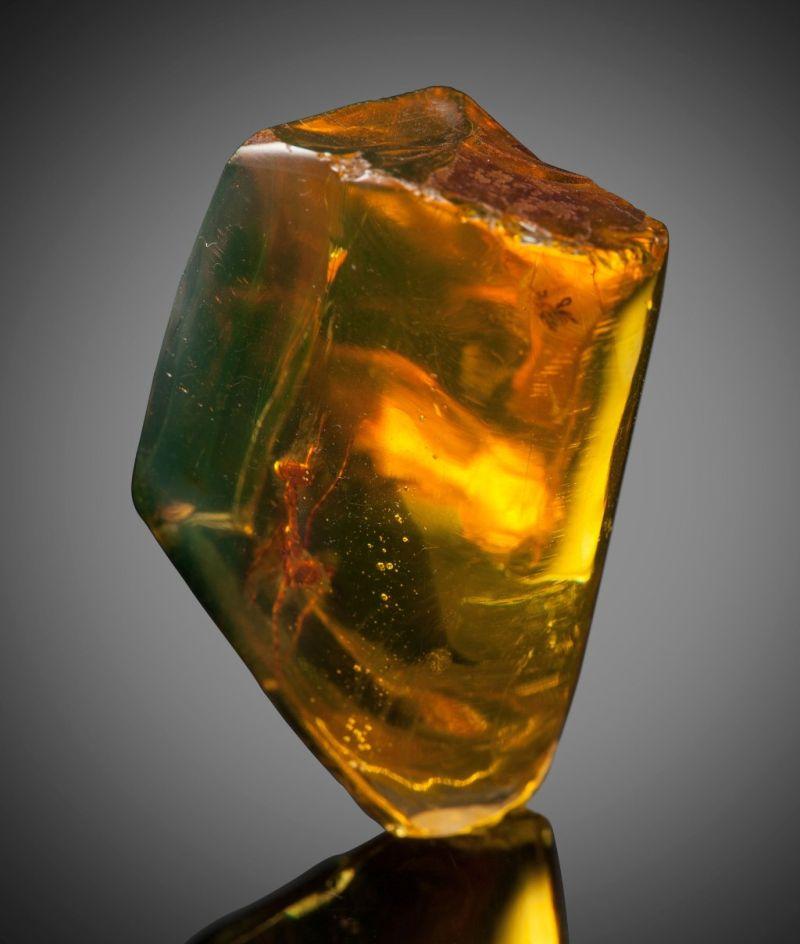 ※ 【フレッシュ】琥珀に閉じ込められたカマキリさん(1200万歳)、マジで感動でワロタwwwwwwww(画像あり)・2枚目