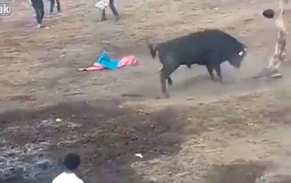 【凄惨】一発目のあと牛の真ん前で目を覚ました闘牛士ニキ、タイミング悪すぎ・・・・・(動画、画像)・9枚目