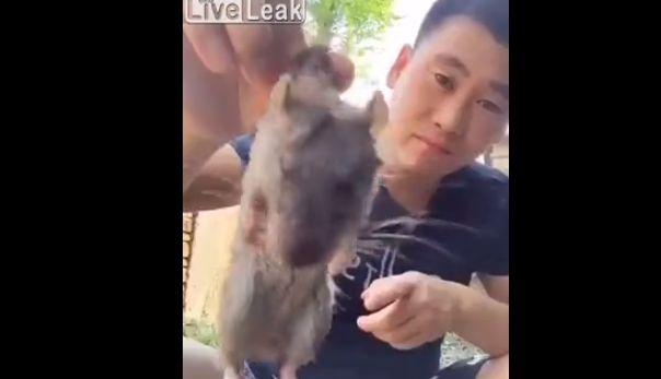 【キチ○イ】中国人ニキのネズミ踊り食い、マジでコイツ頭おかしいだろ・・・・・(画像、動画)・1枚目