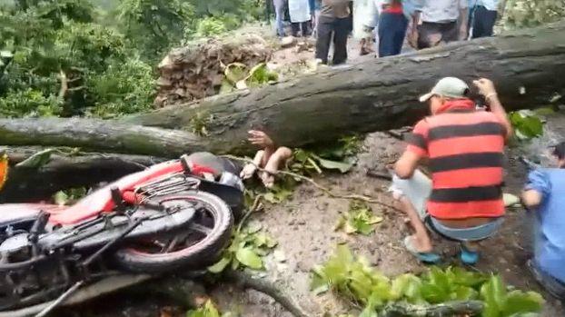 【ハードラック】たまたま倒れてきた倒木に潰されたバイクライダー、これは不運過ぎだろ・・・・・(画像)・2枚目