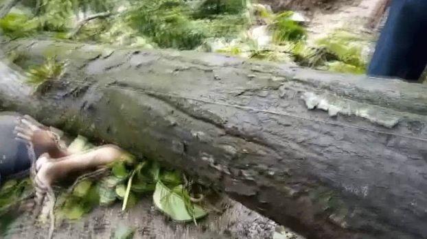 【ハードラック】たまたま倒れてきた倒木に潰されたバイクライダー、これは不運過ぎだろ・・・・・(画像)・3枚目