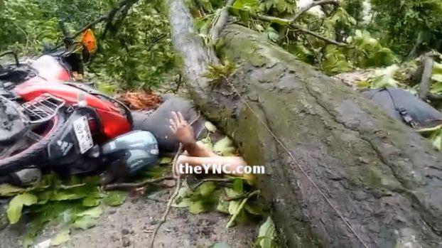 【ハードラック】たまたま倒れてきた倒木に潰されたバイクライダー、これは不運過ぎだろ・・・・・(画像)・4枚目
