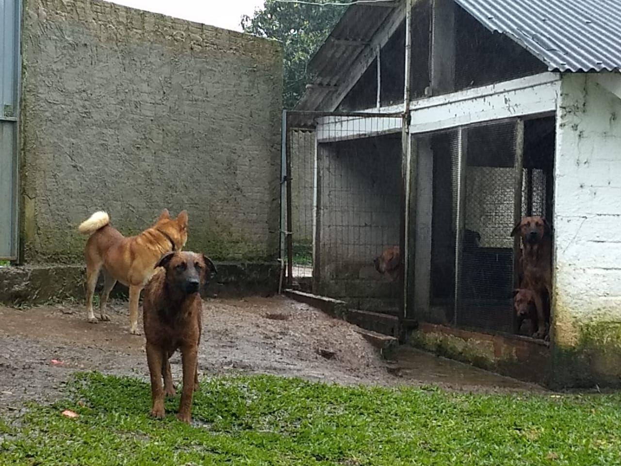 【グロ注意】動物保護施設で犬達に餌をやろうとした女性職員(38)、餌にされる・・・・・(画像)・6枚目