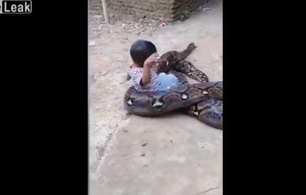 【超野生児】超巨大なニシキヘビにじゃれついて遊ぶ少年、危な過ぎだろ・・・・・(動画)・1枚目