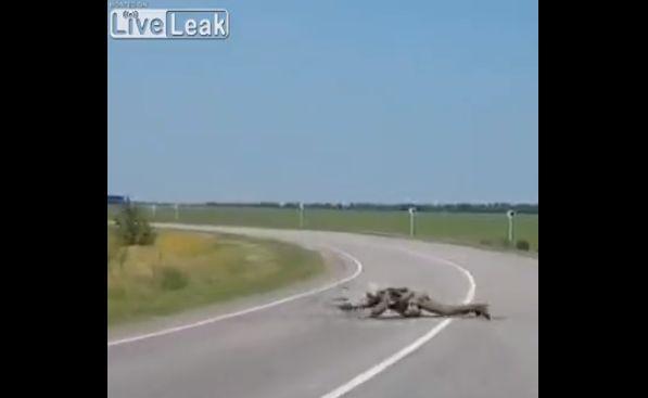 【危険】道路に突如現れたパラシュート、その先には・・・・(動画)・2枚目