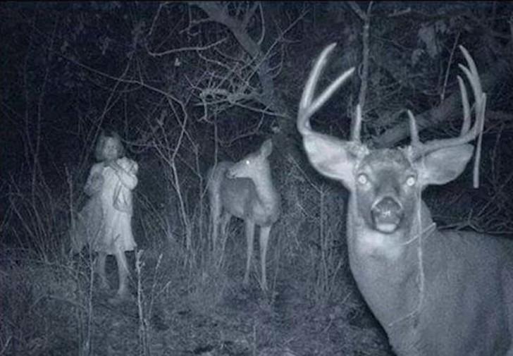 【恐怖】狩猟用モーションセンサーカメラに映った物体、ガチで怖過ぎだろ・・・・・(画像)・1枚目