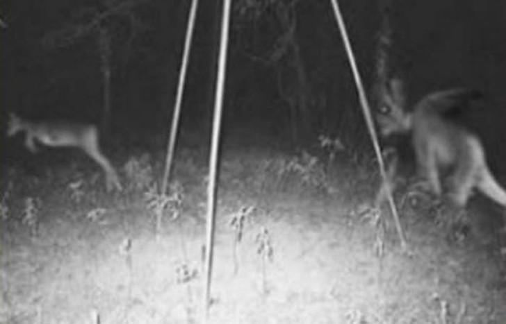 【恐怖】狩猟用モーションセンサーカメラに映った物体、ガチで怖過ぎだろ・・・・・(画像)・6枚目