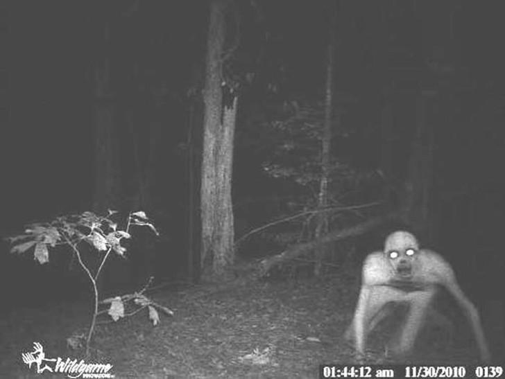 【恐怖】狩猟用モーションセンサーカメラに映った物体、ガチで怖過ぎだろ・・・・・(画像)・8枚目