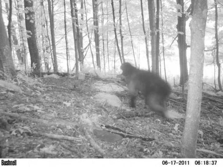 【恐怖】狩猟用モーションセンサーカメラに映った物体、ガチで怖過ぎだろ・・・・・(画像)・9枚目