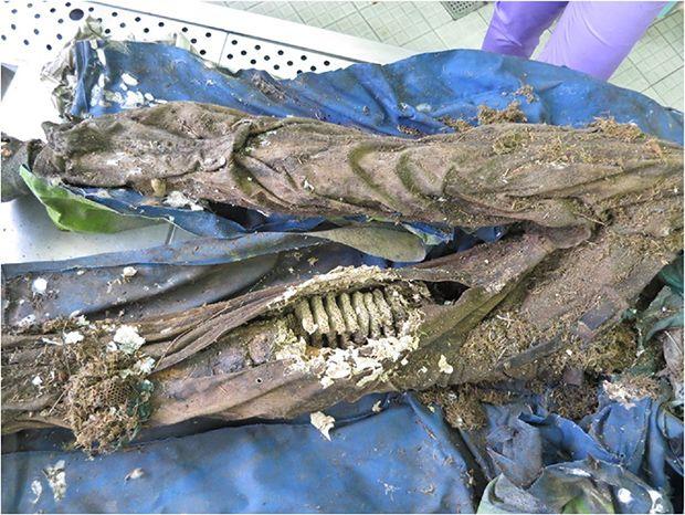 【閲覧注意】ポーランドで発見された13年前の首つり死体、全身に蜂とリスの巣を作られる・・・・・(画像)・3枚目