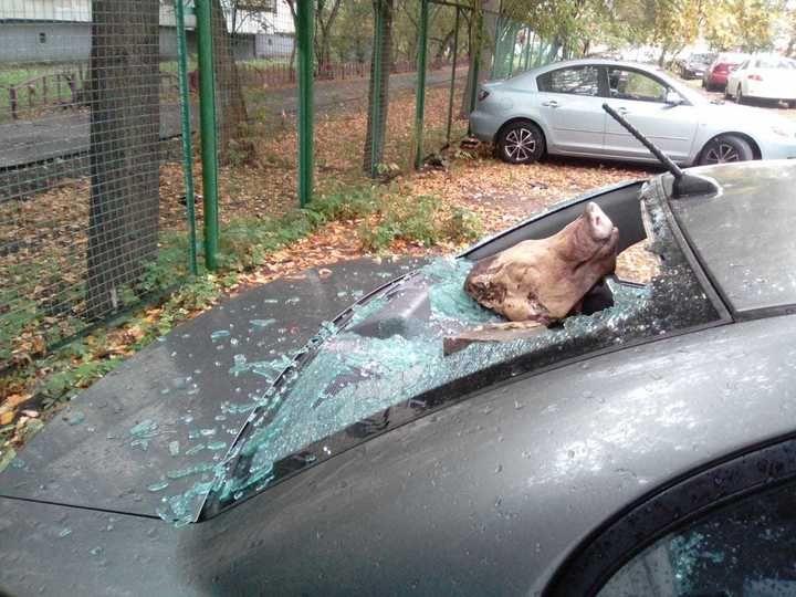 【過激】ロシアの埋め立て反対派議員さん、推進派に嫌がらせでとんでもないモノを車にブチ込まれる!!(画像)・3枚目