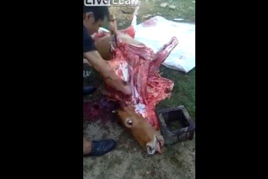 【食育】中国の牛解体現場、ナイフを入れる度に牛さん動きまくってて怖い・・・・・(動画)・1枚目