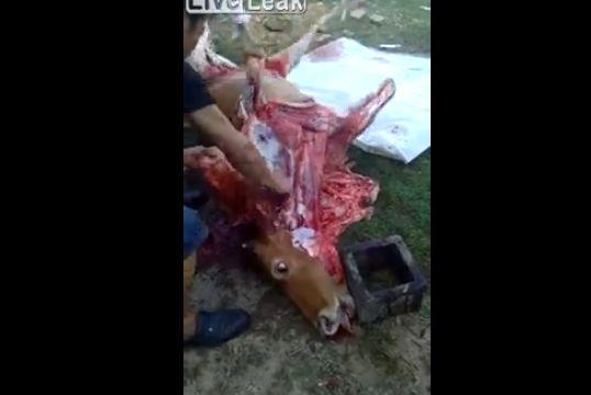 【食育】中国の牛解体現場、ナイフを入れる度に牛さん動きまくってて怖い・・・・・(動画)・2枚目