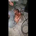 【拷問動画】警察じゃなく被害者自身に捕まえられた泥棒、私刑された挙句電流流される・・・・・(動画)
