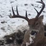 【芸術的】雪に埋もれて凍死した鹿、まるで生きてるみたい・・・・・(画像)