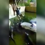 【お約束】ワニ池の上をターザンロープしようとした飼育員のおじさん、ロープが・・・・・(動画)