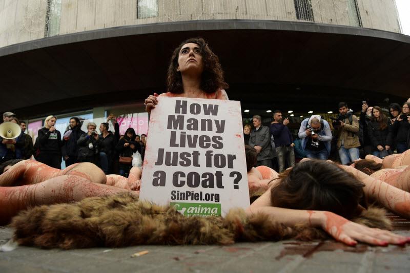 【キチ●イ】動物保護団体さん、相変わらず意味の分からない抗議で世間を騒がせる・・・・・(画像)・11枚目