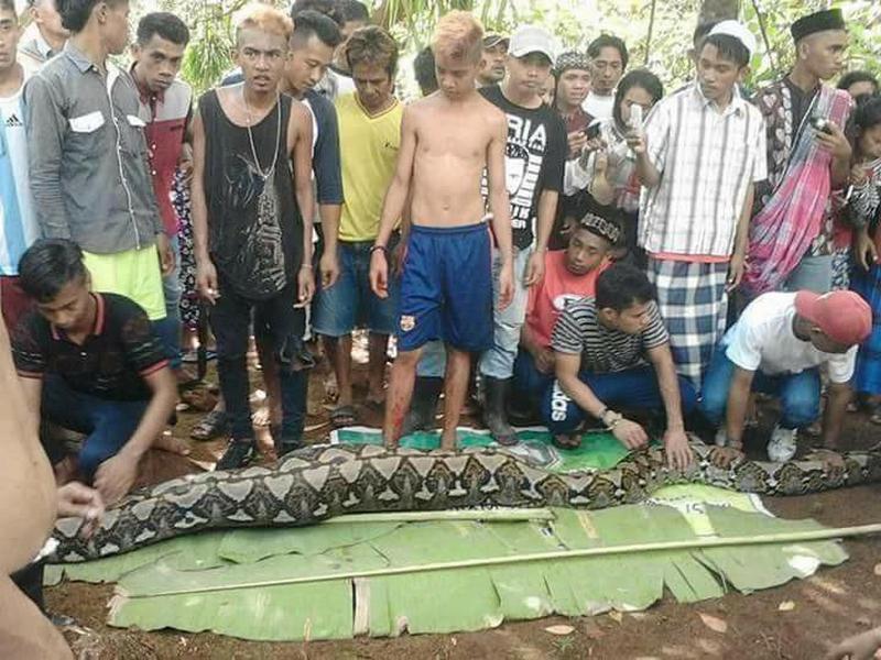 【閲覧注意】インドネシアで巨大ニシキヘビに丸呑みされた女性、腹の中から発見される・・・・・(動画)・1枚目