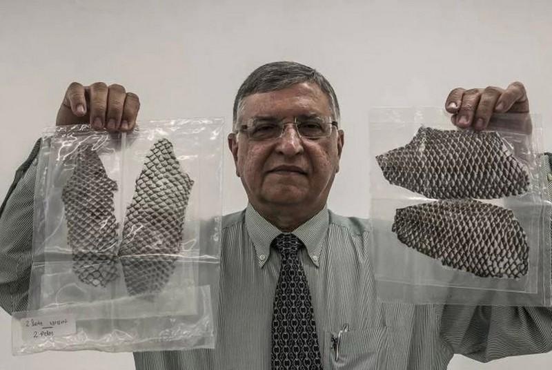 【再生医療】マ○コを持たず生まれてきたブラジル人女性、魚の皮からマ○コを創り出して搭載する!!(画像)・2枚目