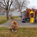 【怖過ぎ】フェイク?ガチ?海外で脱走したライオンが児童公園に・・・・・(動画)