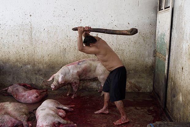 【ショッキング】メキシコ屠殺場で食肉へと加工される動物たち、家畜さんの目がヤバい・・・・・(画像)・2枚目